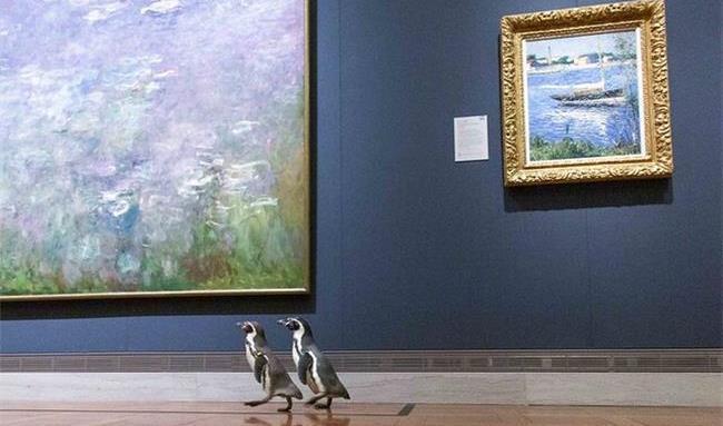 بازدید دو  پنگوئن  از  یک موزه پربازدیدترین مطلب فضای مجازی شد! + تصاویر