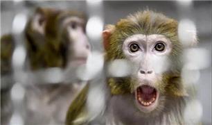 دانشمندان با خلق جنین ترکیب شده از انسان و میمون جنجال ساز شدند