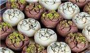 طرز تهیه سه نوع شیرینی خانگی مخصوص عید نوروز / شیرینی های نان برنجی نخودچی و نارگیلی